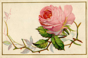 Old-Pink-Rose-Image-GraphicsFairy1